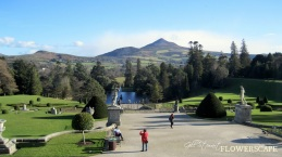 2015-02-24 Powerscourt Slideshow1